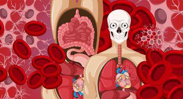 علم التشريح والأنسجة - Anatomy and Histology